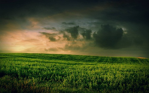 dark grass