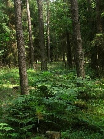 las i paprocie
