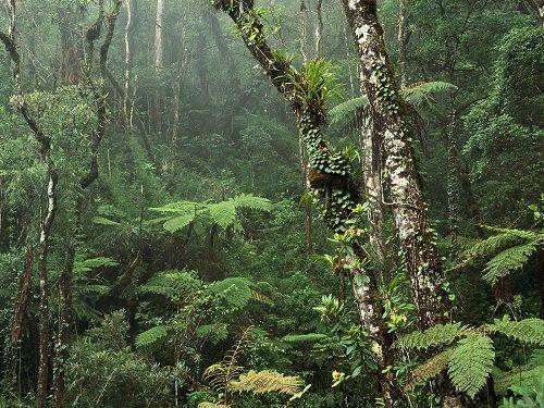 las tropikalny na Borneo