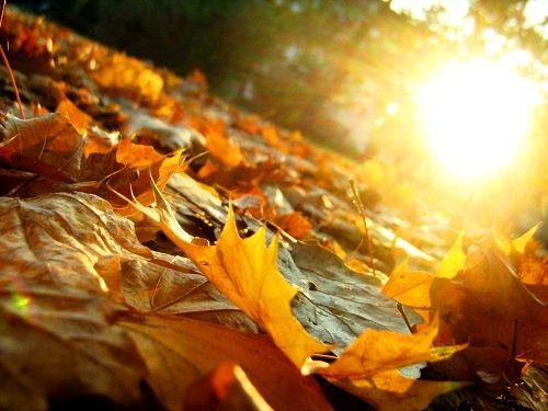 jesienne liście w słońcu