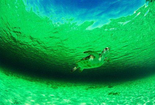 w morskiej toni