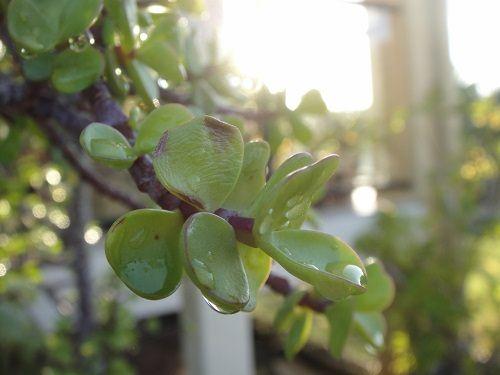 wilgotne rośliny