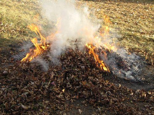 płonące liście