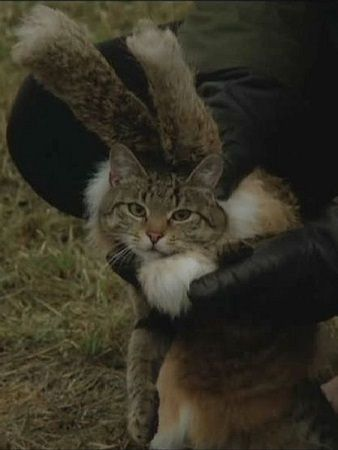 kot z filmu Miś