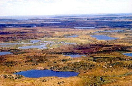 syberyjska tundra