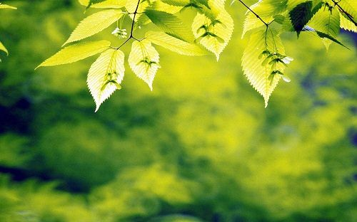 6977163-forest-leaves-background