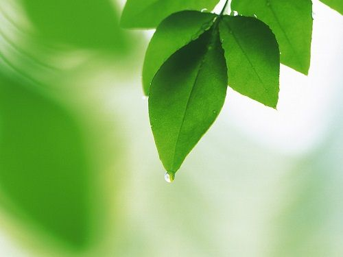 Fresh_green_leaves_da035080f