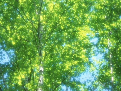 Fresh_green_leaves_JK191_350A