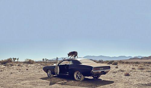 Dior - Sauvage kojot
